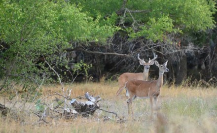 Scouting summertime bucks can be fun, but it also needs to serve a purpose. Author Tony J. Peterson says the chances are high that you're doing it wrong!