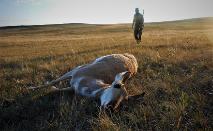 These 6 considerations will boost your odds of getting close and making the shot on a pronghorn or mule deer!
