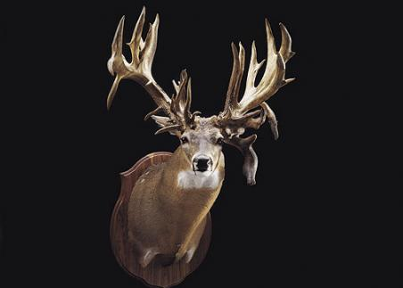 //www.bowhunter.com/files/32-bucks-over-200-inches/01_tonylovstuen11824.jpg