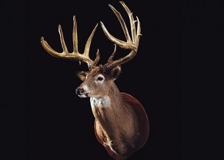 //www.bowhunter.com/files/32-bucks-over-200-inches/15_johnbreen12130.jpg