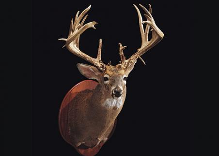 //www.bowhunter.com/files/32-bucks-over-200-inches/26_davidmanderscheid04100.jpg