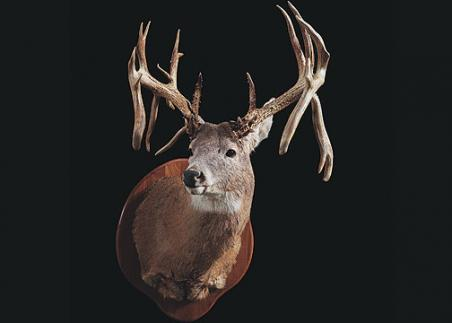 //www.bowhunter.com/files/32-bucks-over-200-inches/32_robertchestnut39251.jpg