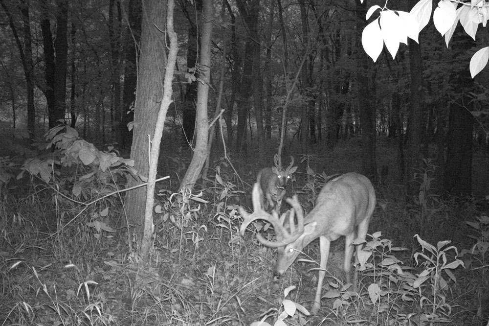 //www.bowhunter.com/files/andy-self-buck/curveballbuck_trailcam_2.jpg