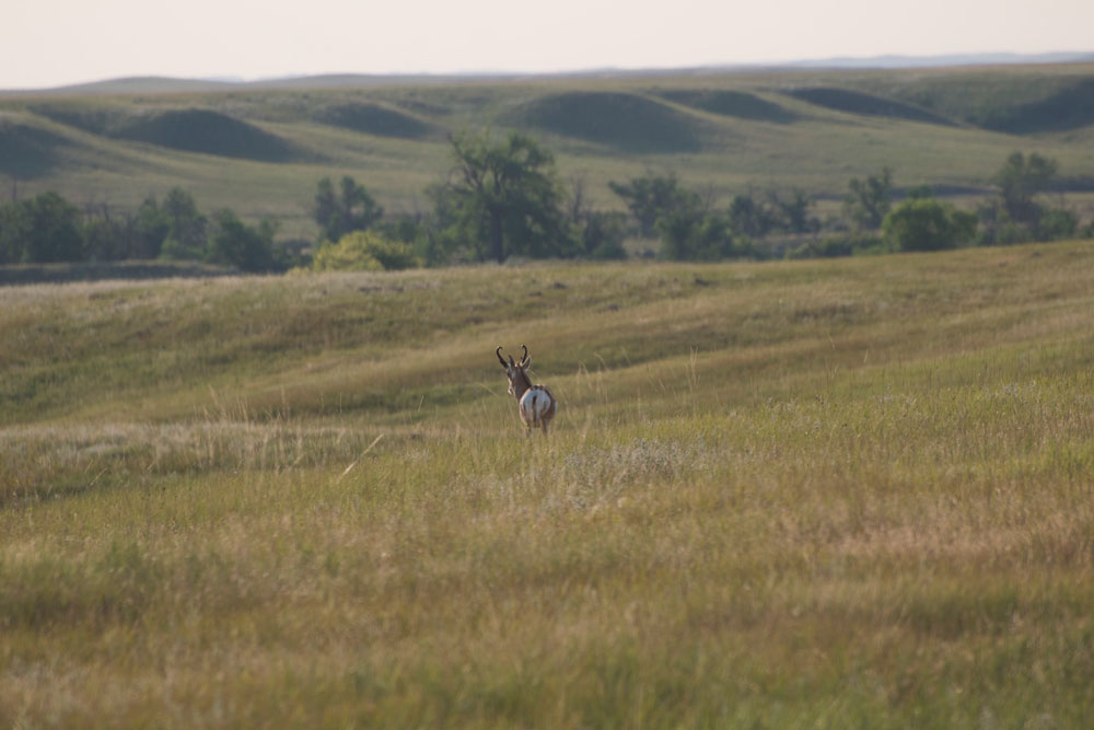//www.bowhunter.com/files/antelope-the-hard-way-10-ways-to-increase-your-spot-and-stalk-pronghorn-success/lost-causes.jpg
