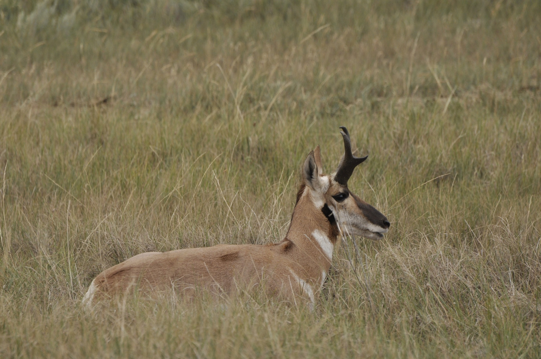 //www.bowhunter.com/files/antelope-the-hard-way-10-ways-to-increase-your-spot-and-stalk-pronghorn-success/wait-for-it-wait-for-it.jpg
