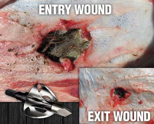 //www.bowhunter.com/files/flying-arrow-toxic-broadhead/01_exit_wounds.jpg