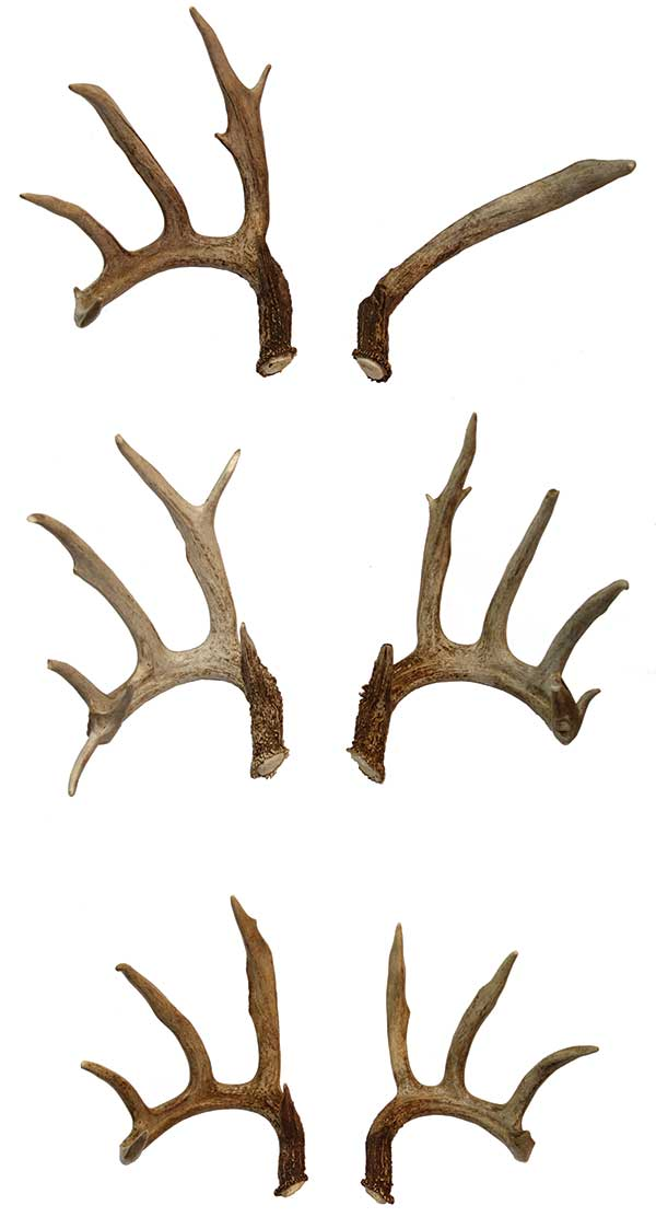 //www.bowhunter.com/files/known-a-midwest-freak/carney_buck_sheds.jpg