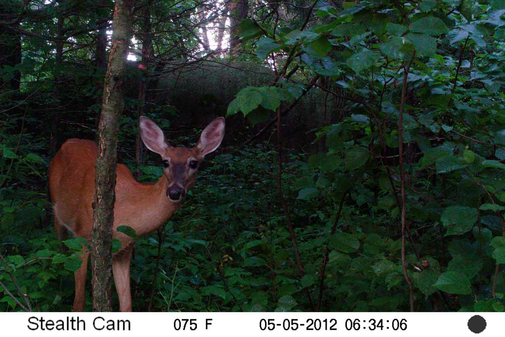 //www.bowhunter.com/files/recon-the-right-way-10-ways-to-improve-trail-camera-efficiency/doe-hangouts_1.jpg
