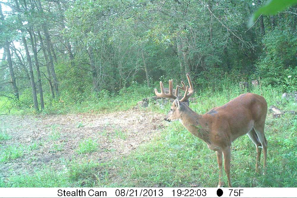 //www.bowhunter.com/files/recon-the-right-way-10-ways-to-improve-trail-camera-efficiency/overlooked-cover_1.jpg