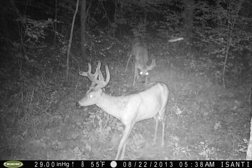 //www.bowhunter.com/files/recon-the-right-way-10-ways-to-improve-trail-camera-efficiency/staging-areas_1.jpg