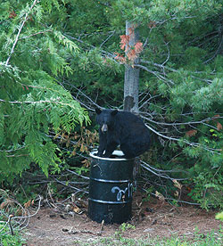 A do-it-yourself guide to scoring black bears over bait.