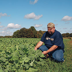 By Bob Humphrey    Large feeding plots such as this brassica field will attract deer