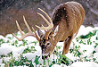 Is Post-Rut The Best Time To Bag A Big Buck?