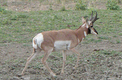 Pronghorn Games