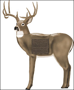 The GlenDel Buck features a 150'' rack and a body size corresponding to a