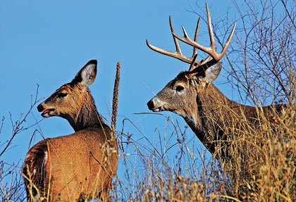 The Risks and Rewards of Letting Bucks Walk.