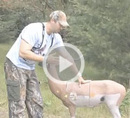 Bowhunter's are often taught to aim behind the shoulder. While there's some truth to that