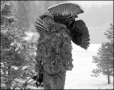 When hunting Merriam's turkeys, high-country weather can be fickle and unpredictable. The author found himself without enough warm clothes on a spring hunt when a sudden snowstorm arrived. The turkey didn't seem to mind at all, coming across 100 yards of open snow to the author's calls.