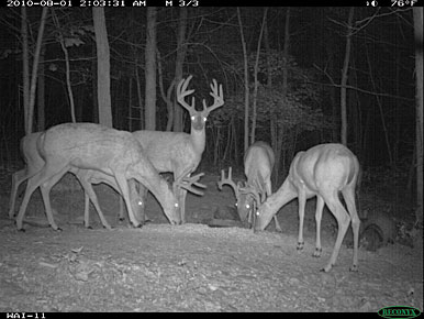 How To Conduct a Trail Camera Census for Whitetails - Bowhunting