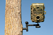 10 Best Trail Cameras For Bowhunters