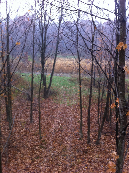 Illinois Live Hunt: Dealing with Mother Nature