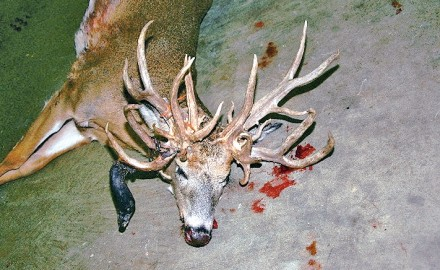 I don't think I've ever seen an antlered doe, but I'd sure like to. They always seem to have these
