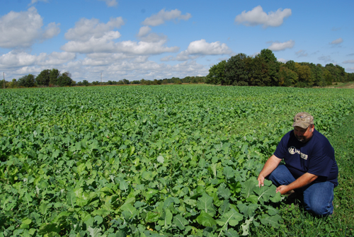 Best Food Plot Seed For Alabama