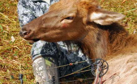 BOWHUNTING Editor Christian Berg killed this cow elk in Kentucky in 2010.