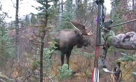 Check out these up close and exciting ground-level kill shots on North American's largest antlered
