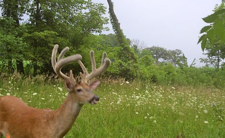We're already on the front steps of summer. Should trail cameras be out right now? These