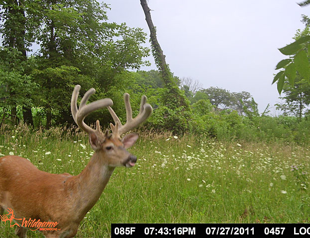 Pros and Cons of Summer Trail Cameras