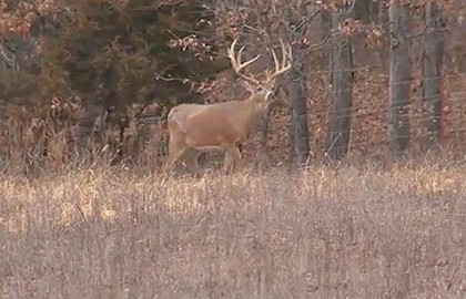 how to call in a buck during the rut