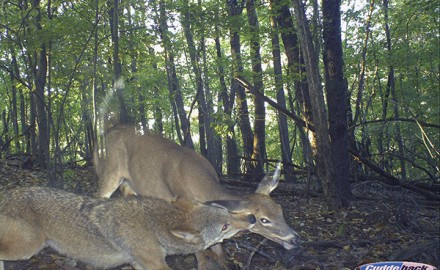 It's almost fawning season throughout most of the whitetails' range. Many hunters don't get as