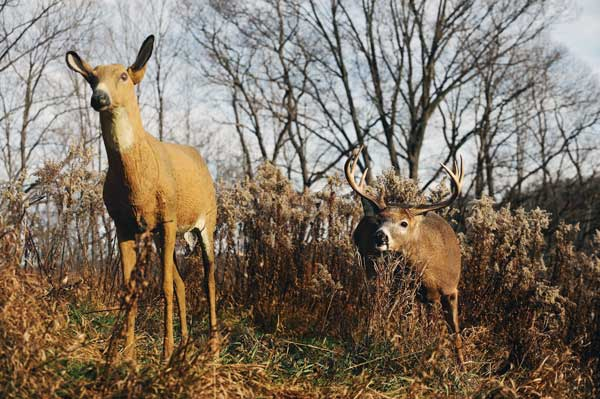 How To Use Deer Decoys In The Rut Petersen S Bowhunting
