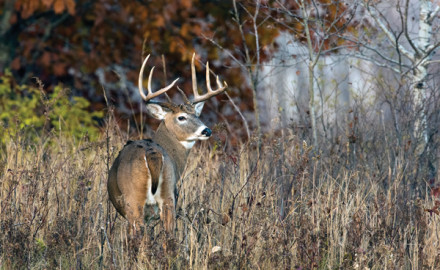 More and more archers are passing young bucks with the hope of tagging a more mature animal. In