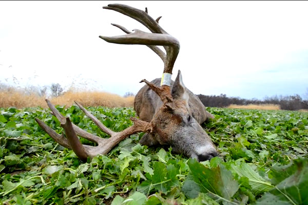 Center Shots: How to Leverage Luck for Successful Whitetail Seasons