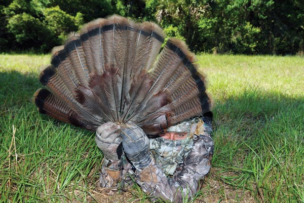 How to Effectively Decoy Turkeys with a Tail Fan