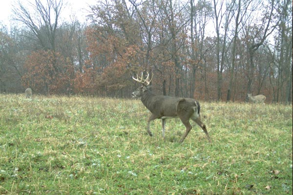 3 Scent Secrets to Lure Rutting Bucks