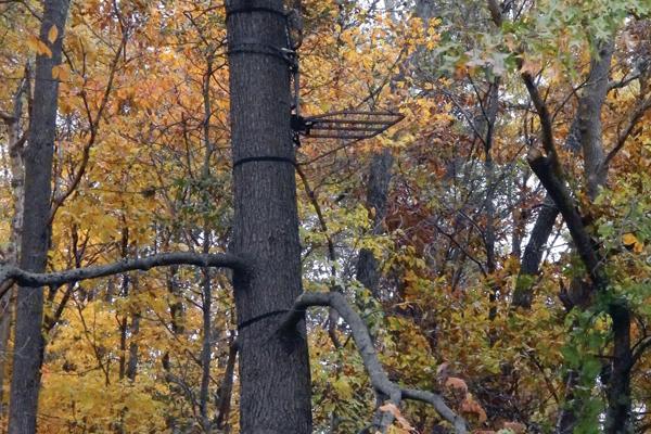 hunting-pressured-ground