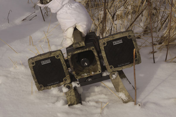 3 Secrets for Bowhunting Coyotes