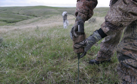bowhunting-coyotes-decoys