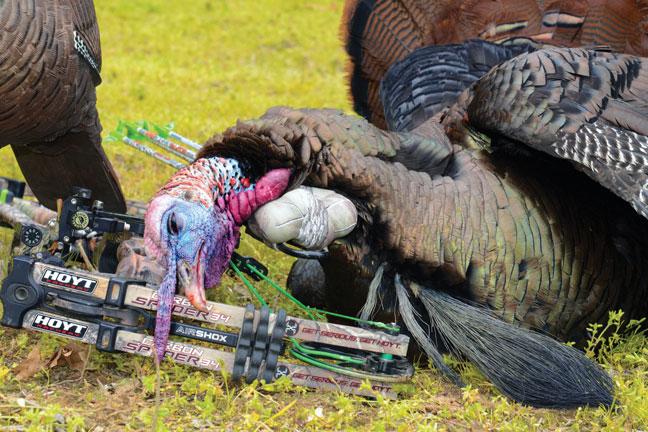 bowhunting-turkeys