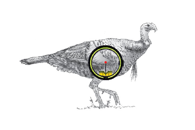 shot-placement-when-bowhunting-turkey