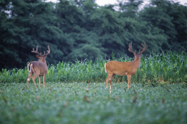 bill-winke-on-finding-summer-bucks