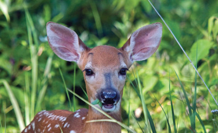 Several states reported a decreased deer harvest during the 2015-16 season. When we think of