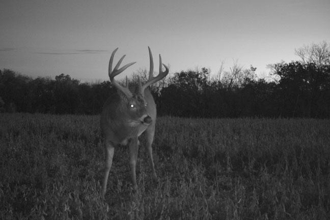 summer-scouting-for-mature-whitetail