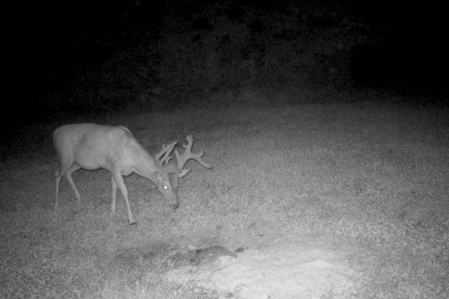 age-deer-to-hunt