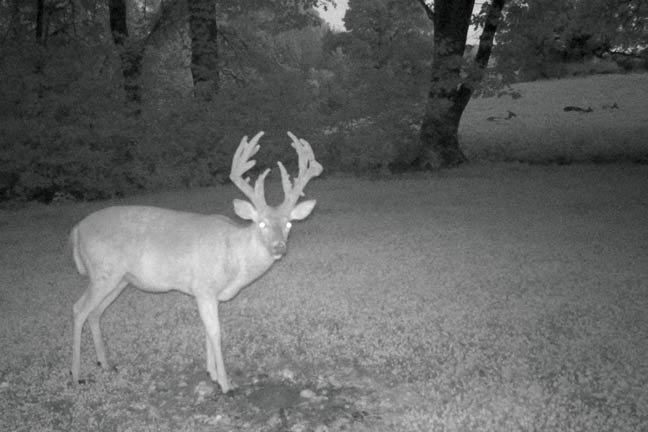 age-of-a-whitetail