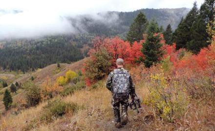 Elk-Hunting-Success