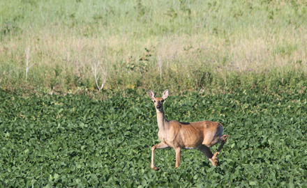 Here's a look at what you need to know and the two sides of the Chronic Wasting Disease argument as a bowhunter!